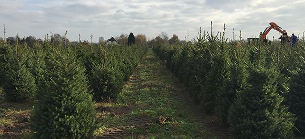 Kerstbomenplantage 1