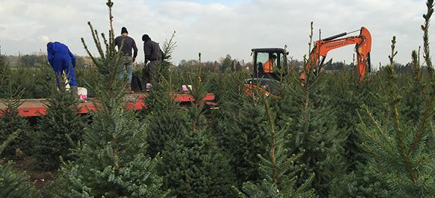 kerstbomen bestellen 1