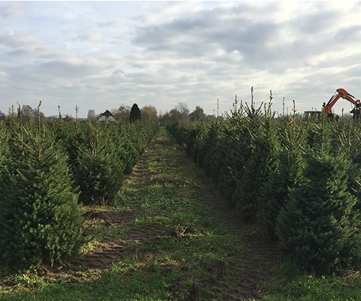 kerstboomplantage