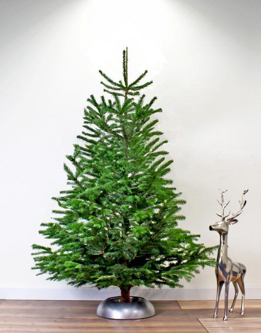 nordmann-echte-kerstboom-1